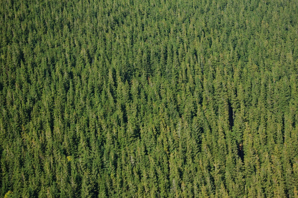 forest_pattern_194273